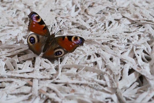 butterfly-710127_640