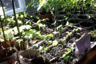 Puutarhaneuvontaa ja makaronivuokaa netissä – Perinnetalkoot siirtyi virtuaaliaikaan