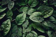 Ekotehokkuus ja eettisyys vaatetusalalla