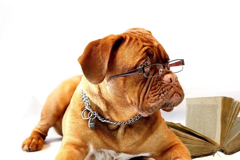 koira makaa silmälasit päässä kirja taustalla